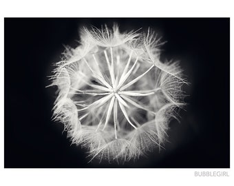 Nature Photography PRINT, Black and White Dandelion, Wall Art