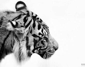 Animal Photography PRINT, Tiger, Wall Art