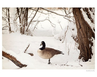 Nature Photography PRINT, Canada Goose in the Snow, Wall Art