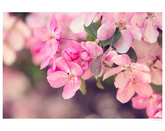 Nature Photography PRINT, Apple Blossoms - 3, Wall Art