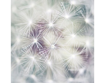 Nature Photography PRINT, Inside a Dandelion, Wall Art