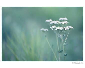 Nature Photography PRINT, Queen Anne's Lace in a Field, Wall Art