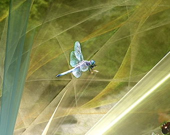 Photo of Dragonfly Wall Art,Picture of Dragonfly,Dragonfly Fantasy Picture,Dragonfly Fairytale Photograph,Dragonfly Art,Picture of Dragonfly