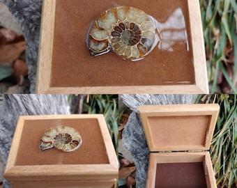 otb2 Fossil Trinket Box Orthocerus Trinket Box With Information Card