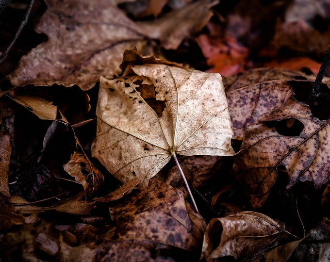 New England Fall Foliage Photography, Macro Print, Large Photo Print, Autumn Photography, Nature Photography