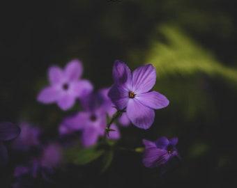 Flower Photography, Garden Photography, Nature Photography, Floral Photography , Purple Flowers, Photo Prints, Fine art Prints, Botanical