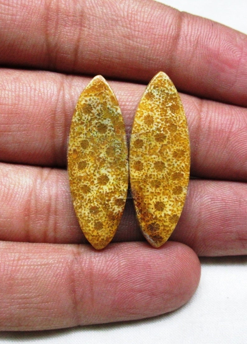 Fossil Coral Pair Fossil Coral Cabochon Loose Fossil Coral Gemstone Size 12 x 34 x 4 mm Designer Matching Earrings Pair ET 6093