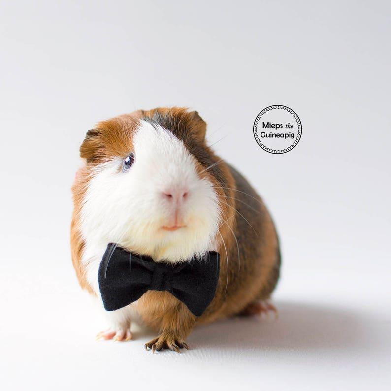 Bow tie for guinea pig Black