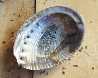 Abalone Shell Smudging Shell Polished Smudge Bowl Seashell Altar Tools / Bowl for Burning Incense / Sage Burning Shell / Large Sea Shell