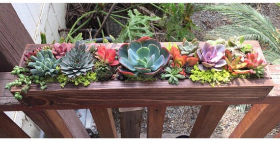 Succulent Arrangement Garden Table Centerpiece In Long