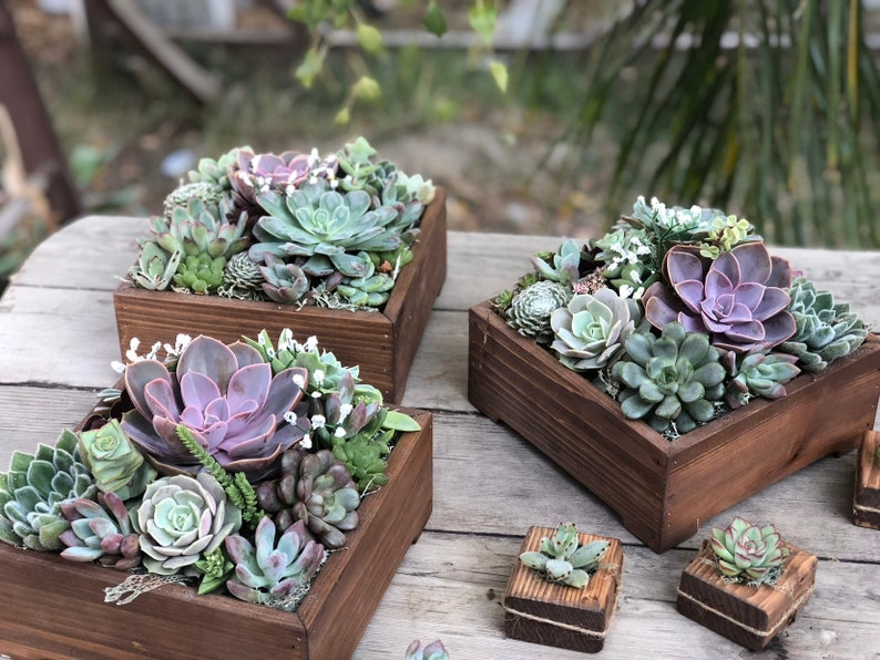 Succulent wedding centerpiece succulent wedding arrangement | Etsy
