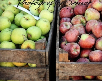 This is the time for apples, watercolor on paper Print, Red and Green Apples, Autumn Season, Home Decor, Food Photo