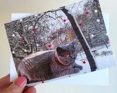 British Blue shorthair Cat birthday card, british blue cat card, i like cats card, shorthair cat greeting card, cat lover  card, cat lady