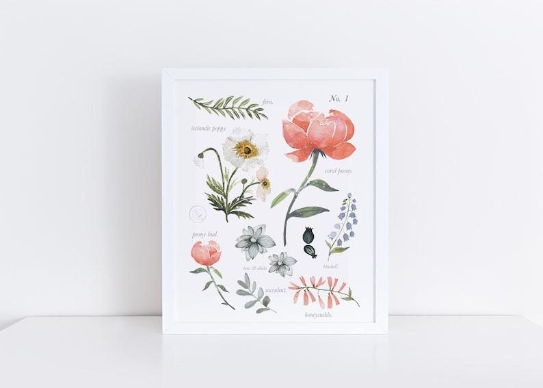 Botanical Flower Identification Art Print