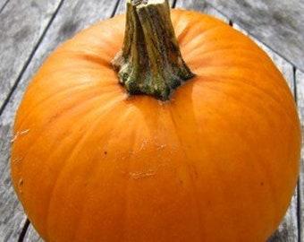 100 Small Sugar Pumpkin Seeds. Chemical Free. Non GMO.