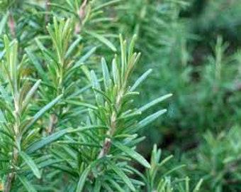 50 Rosemary Seeds. Non-GMO. **Medicinal**