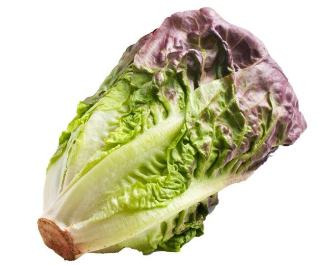 100 Red Romaine Lettuce Seeds. Non-GMO