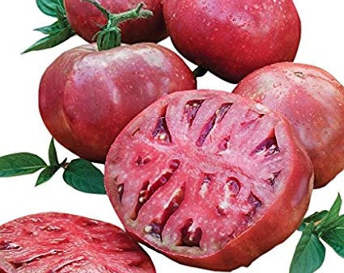 100 Cherokee Purple Tomato Seeds. Heirloom. Chemical Free. Non GMO. Combined shipping & handling.