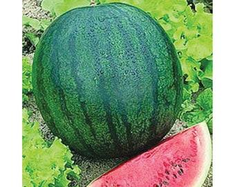 25 Sugar Baby Watermelon seeds