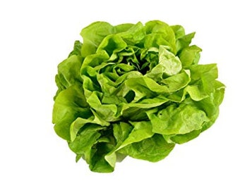 100 Buttercrunch Butterhead Lettuce Seeds. Non-GMO.