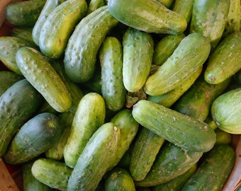 25 Boston Pickling Cucumber seeds