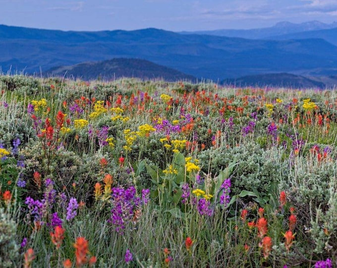 1 Oz. Wildflower habitat seed mix. Chemical free. 300 square feet.