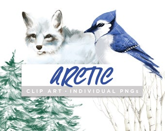 Arctic Collection Clip Art // Blue Jay Fox Snow Winter Pine Birch Planner Stickers Clipart Digital Graphic Illustration Scrapbooking