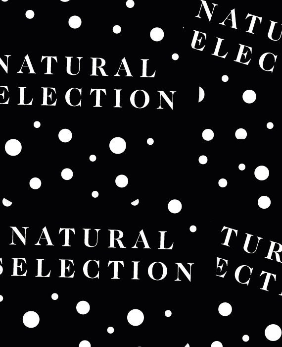 Natural Selection Origin of Species Charles Darwin Sticker Evolution laptop Car bumpers Survival of the Fittest