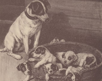 Gorgeous Jack Russell Terrier Dog & Jack Russell Terrier Puppies Antique Dog Art Print 1908