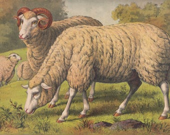 Sheep Flock in Meadow with Lamb Ewe and Ram Farm Animals Pastoral Antique Lithograph Art Print 1881