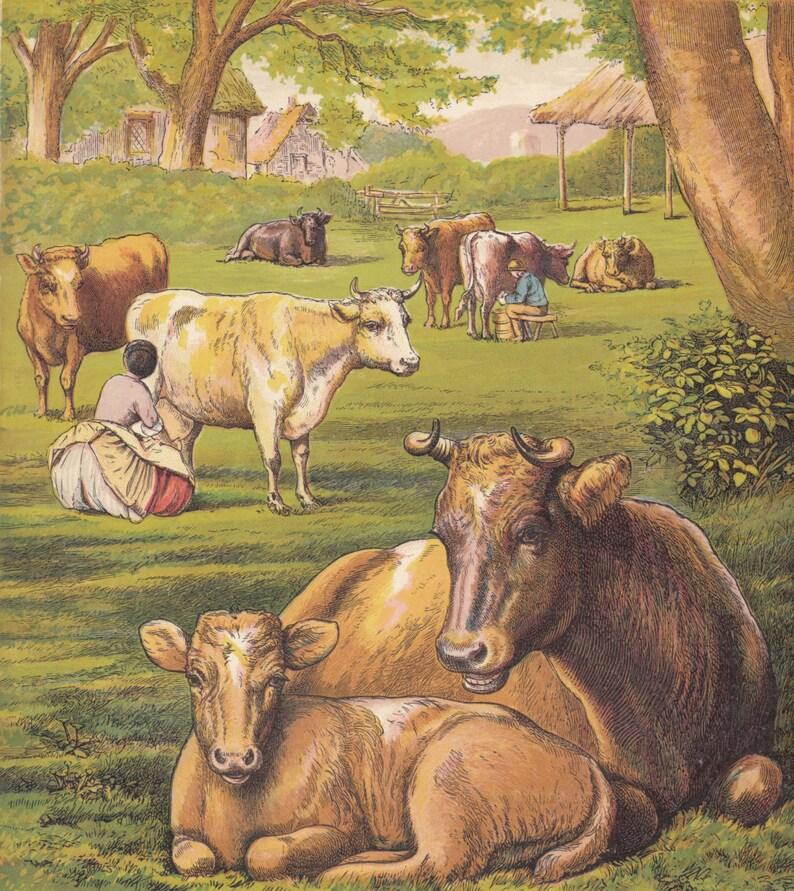 Milchsklavin