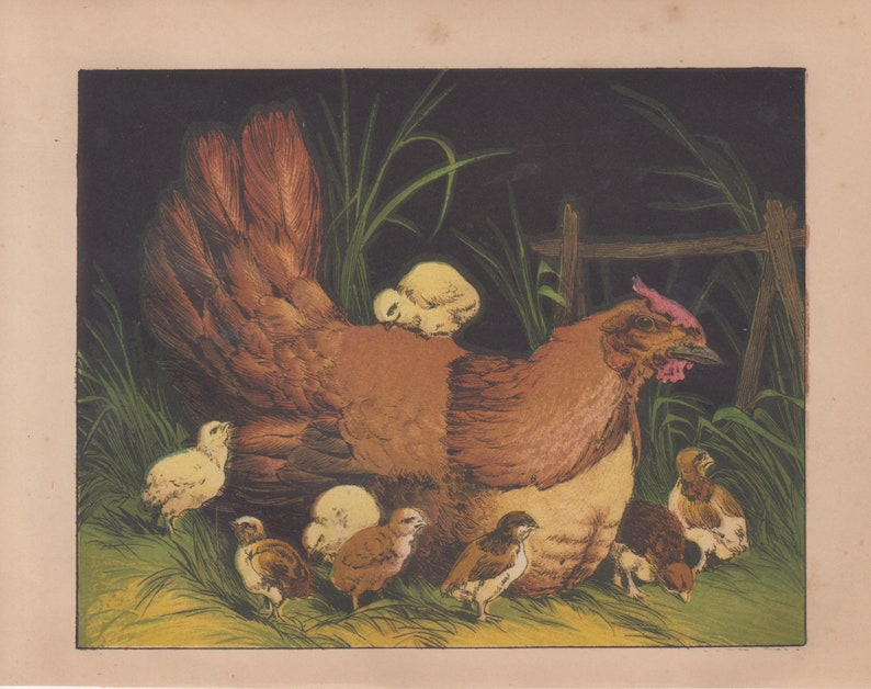 Chicken Hen with Baby Chicks Poultry Birds Farm Animals Rare Antique Art Print Lithograph 1865