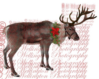 DIGITAL Reindeer overlay png, for Christmas, xmas, photography, photographers, photos
