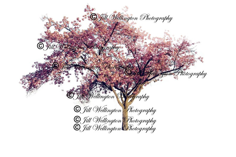 DIGITAL Spring flowering pink tree png for photography image 0