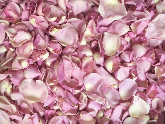 Freeze Dried Rose Petals Rosy Mauve perfectly preserved 30 cups of REAL rose petals