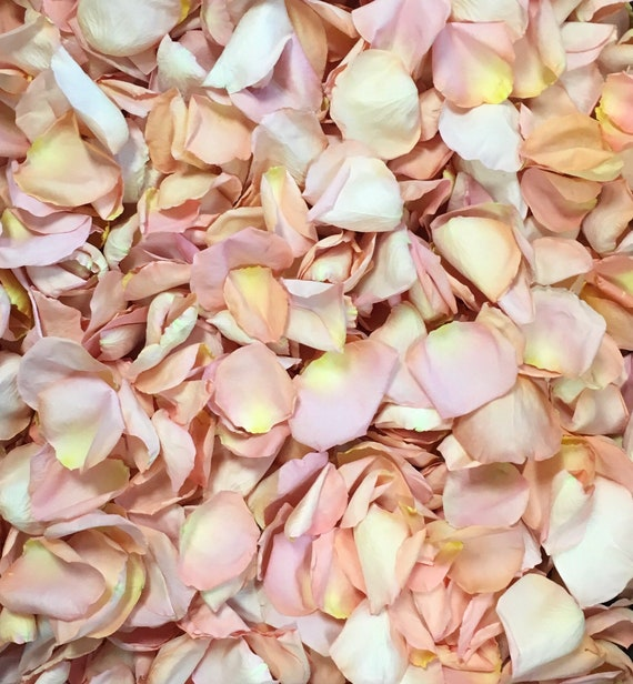 Freeze Dried Rose Petals, Seashell, 5 cups of REAL rose petals, perfectly preserved