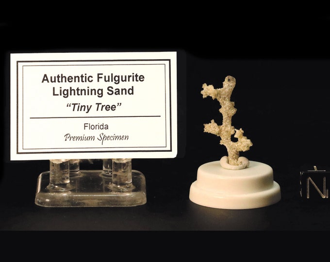 Fulgurite Tiny Tree Lightning Sand Sculpture