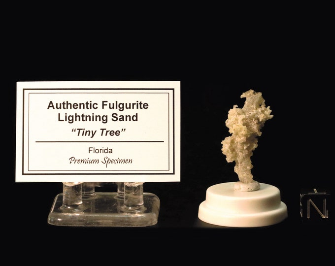 Fulgurite Lightning Sand Tiny Tree
