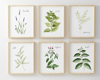 Hand Painted Watercolor Herb Prints Set of Six