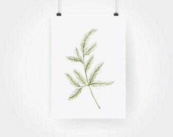 Hand Painted Watercolor Herb Dill Print