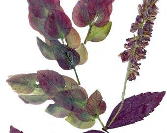 Pressed flower art / Burgundy leaves and flowers