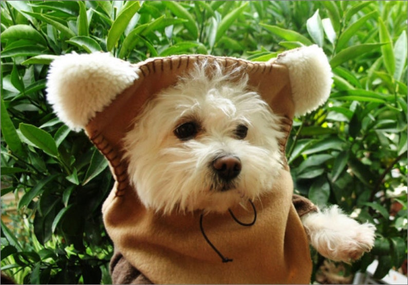 Small Dog Clothes Ewok Dog Costume Chihuahua Coat Yorkie Etsy