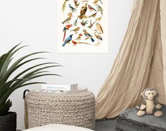 Vintage Antique Birds Illustration Painting Poster Wall Art