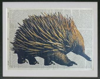 Echidna Print No.550, echidna poster, echidna wall decal, spiny ant eater, australian animals, dictionary art