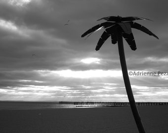 Brooklyn Palm Tree Coney Island Beach Sun Sand Jetty Photography Black & White Trees Photo Images New York NYC Photograph
