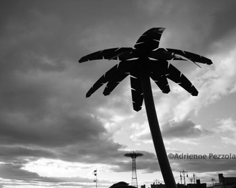 Brooklyn Palm Tree Parachute Jump Coney Island Beach Sun Sand Jetty Photography Black & White Trees Photo Images New York NYC Photograph