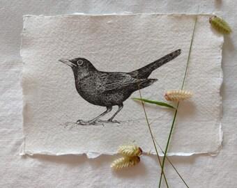 Original pen and ink drawing of a Blackbird (Unframed)