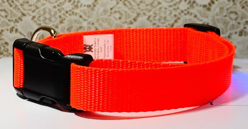 Hot Orange Dog Collar image 0