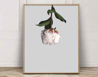 Art Prints, Flower Art, Peony, Flower Wall Poster, Poster Art, Flower Wall Print, Poster, Wall Art Prints, Floral, Print, Flower Art Print