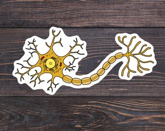 Neuron Sticker, Medical Nerd Laptop Stickers, Brain Cell Sticker, Cellular Biology, Histology, Neurology Gift, Neuroscience, Neuron Decal
